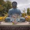 Maui Buddha